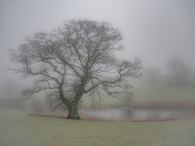 A Muted Morning at Up Cerne by Jane Tearle, Highly Commended Section A