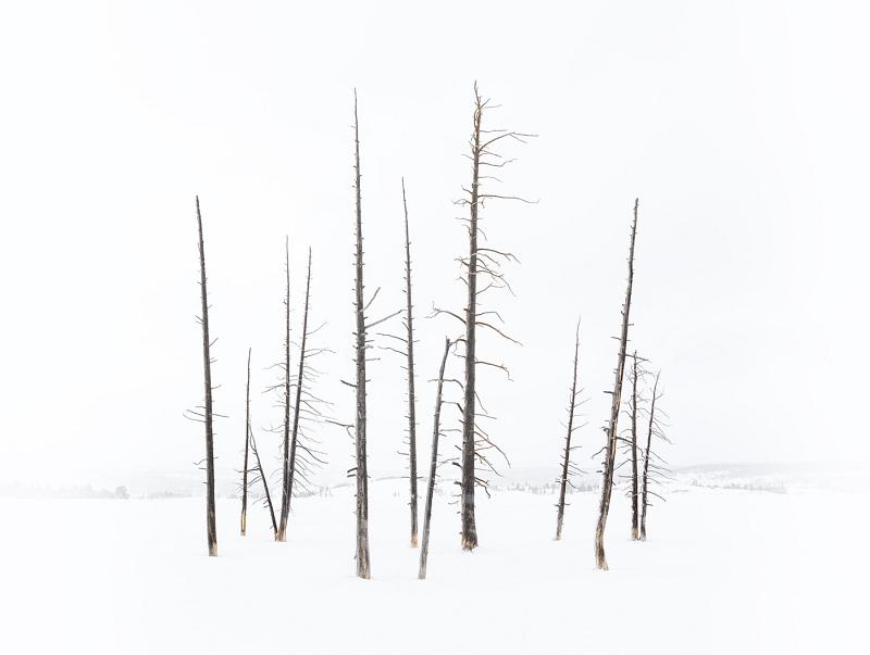 Bobby Socks Trees by Stephen Lee