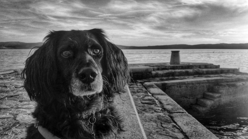 Buddy at Selce by Steve Broadhurst