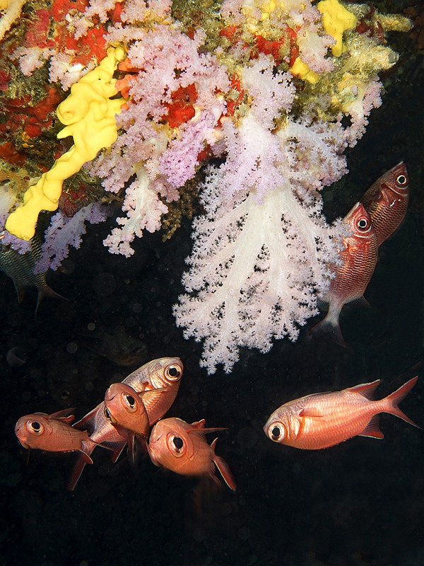 Coral and Fish on Cave Roof by Spike Piddock