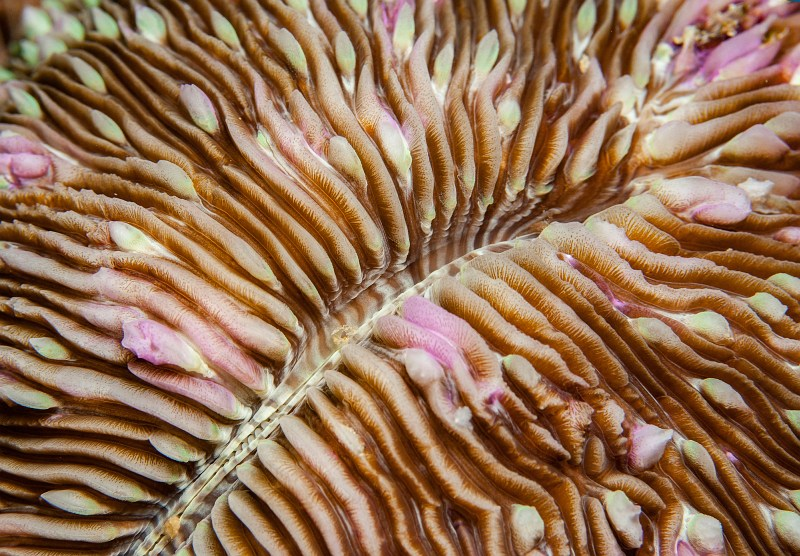 Coral detail by Spike Piddock