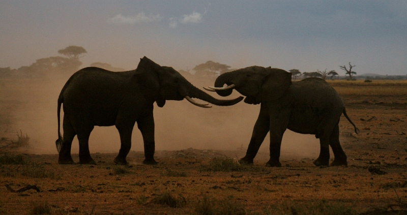 Early Evening Scuffle by Steve Broadhurst, Section B Winner Comp 7 Focus on Nature Digital 2014-15