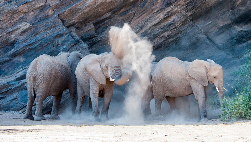 Elephants in the Dust by Janine Scola First Section B