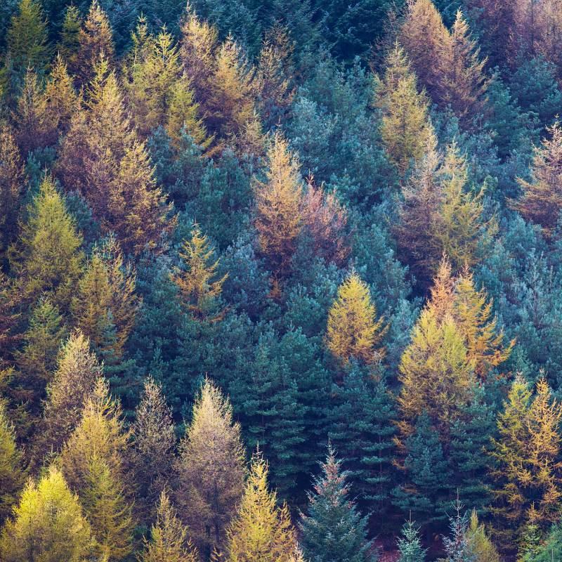 Exmoor Trees by Jane Lee