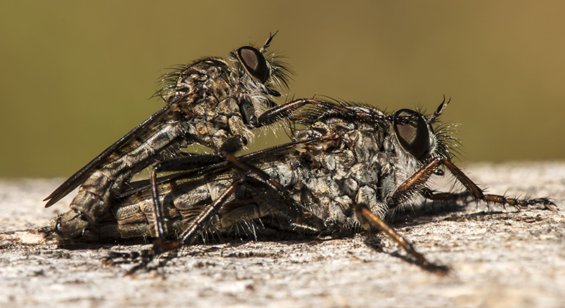 Flies by Rob Bridge (LRPS Panel)