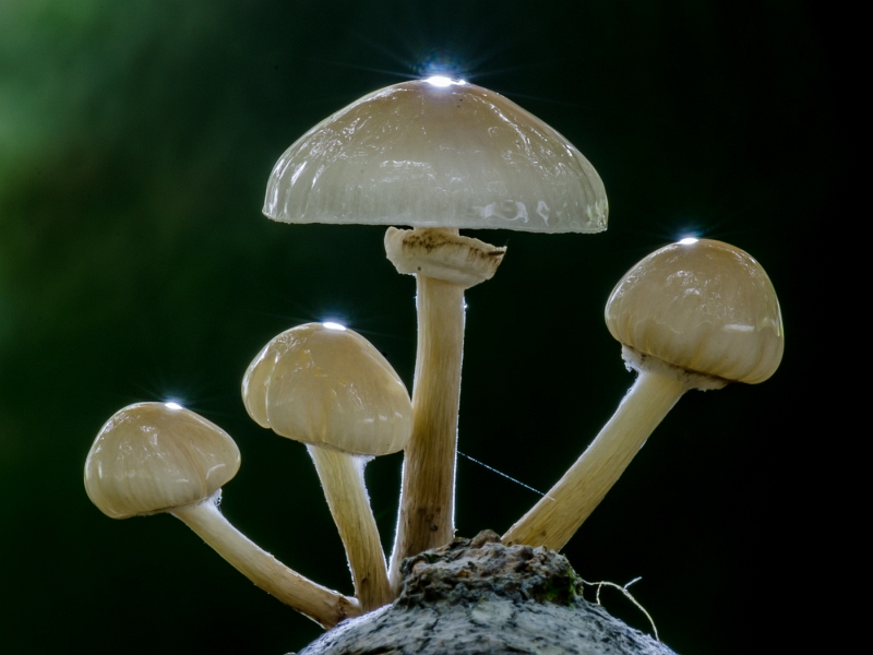 Fungi by Jez Cunningham