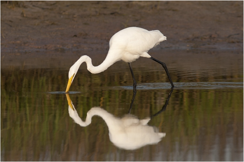 Heron Reflection by Sid Jones