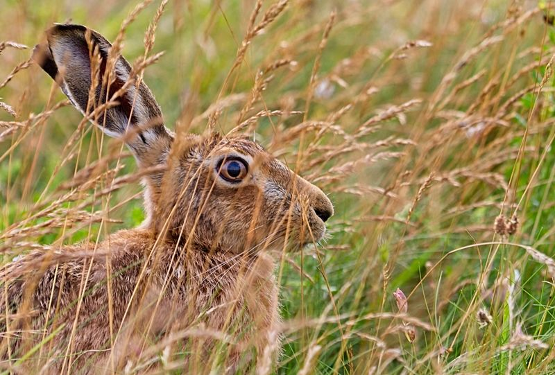 Hiding in the long grass by Phil Whiffing Highly Commended Section B