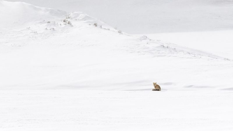 Lone Red Fox by Stephen Lee