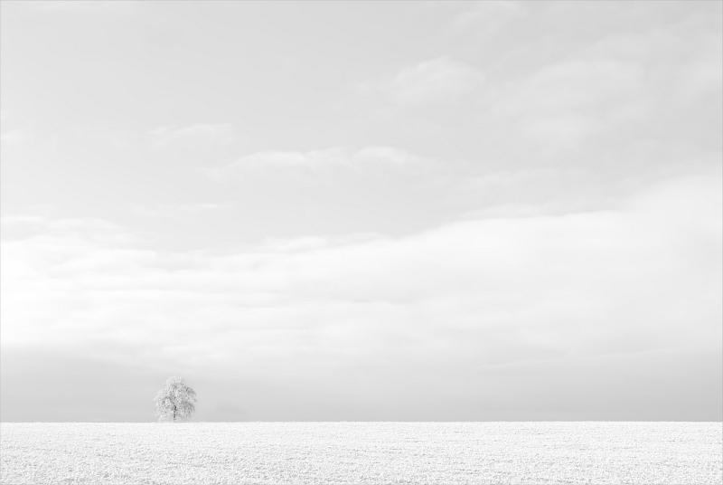 Lone Tree in Winter by Dee Wareham