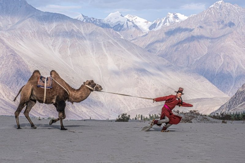Man and His Camel Ladakh by Jane Tearle