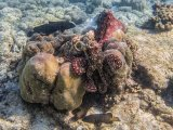 Mating Octopuses and Reef Fish by Penny Piddock