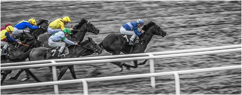 Newbury Racing by Roy Stone
