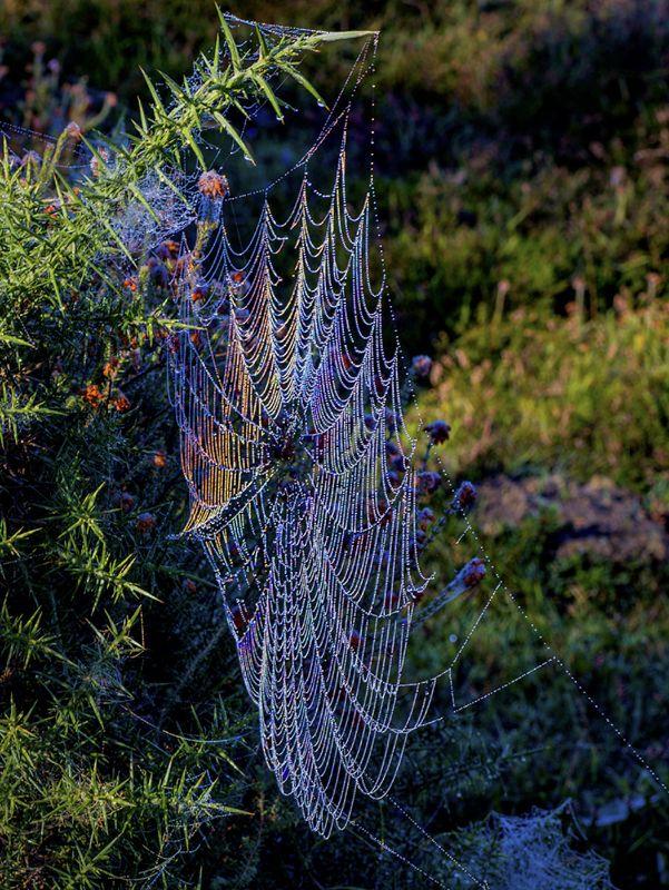 Rainbow Web by Penny Piddock