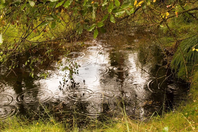 Raindrops at Arne by Frank Schweitzer, Third Section B