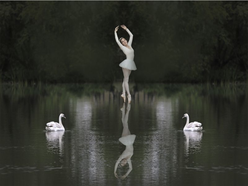 Swan Lake by Neil Crick