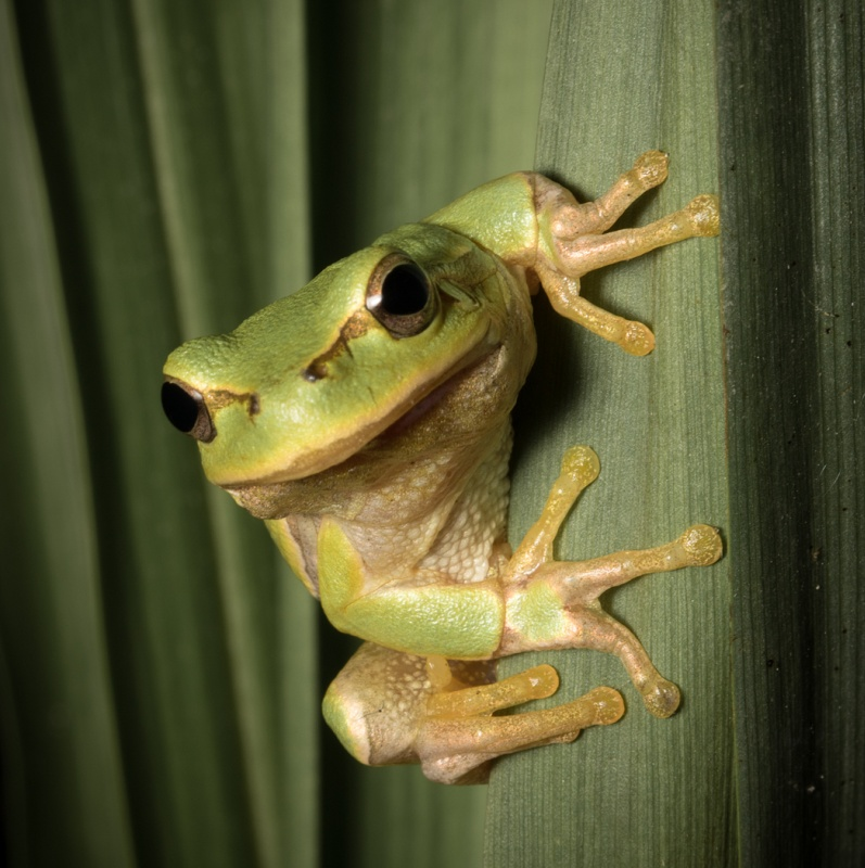 Tree Frog by Frank Schweitzer - HC Section B