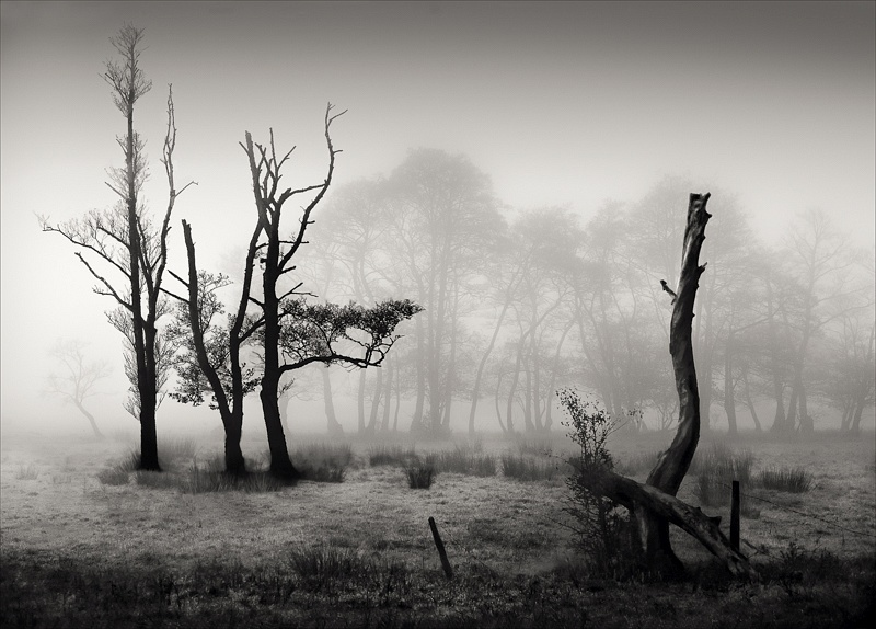 Trees in the Mist by Barry Senior