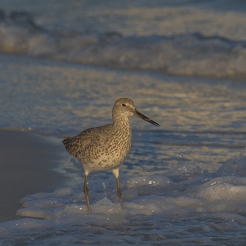 Willet, Florida by Jane Tearle