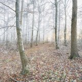 Woodland Frost and Mist by Tony Gill, Second Section A