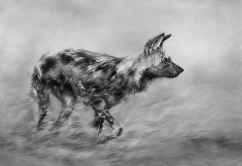 Wild Dog Hunting by Lisa Bukalders