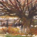 Bury Common in flood NFS