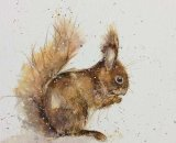 Readda  - a red squirrel 20x20cm  limited edition giclee print signed and made to order