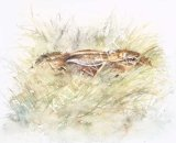 Hara - brown hare resting 31x25cm