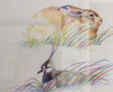 Hare and Lapwing