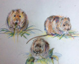 Three British Watervoles