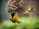 Weaver Bird Conversation