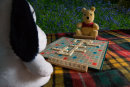 Woodland Scrabble