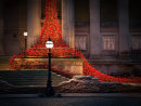 Poppies at St George's Hall Liverpool