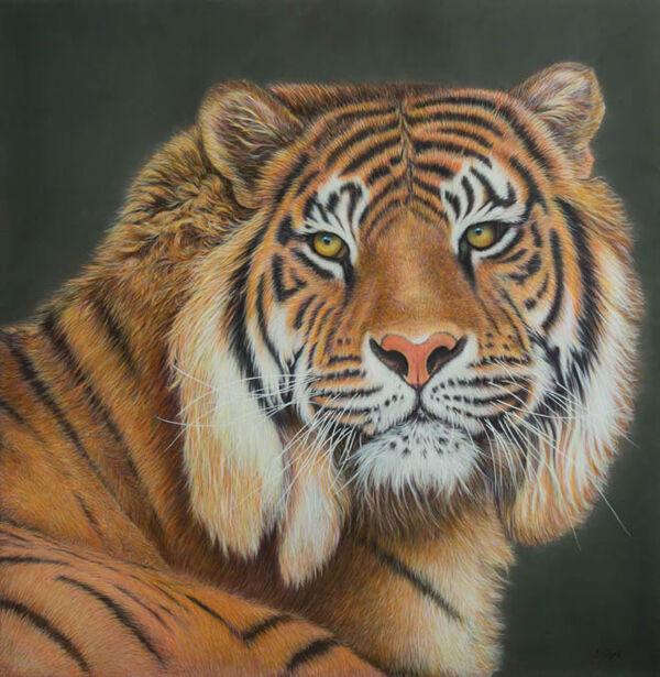 Tiger-Colour