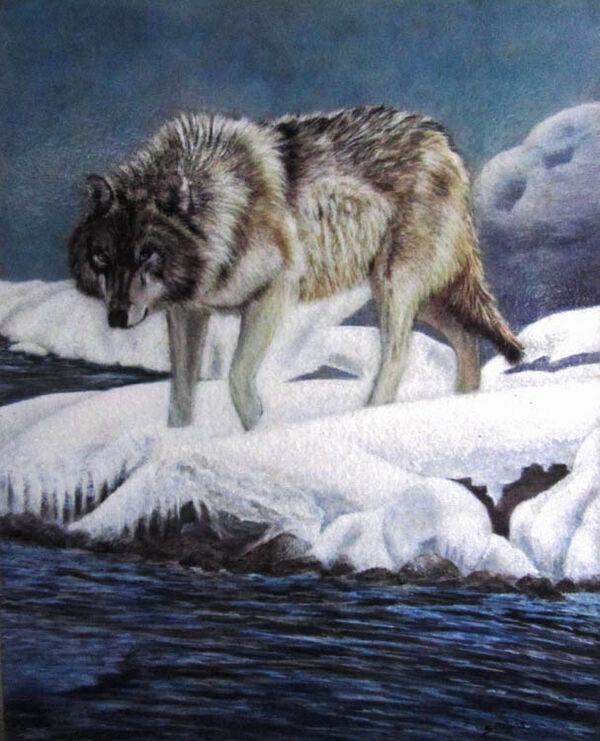 Wolf-on-Snow