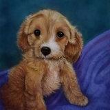 Pet Portrait Maddie The Spoodle Puppy