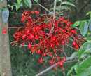 Red Flowering Shrub