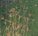 A grass