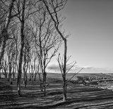 Rocky Ness, Kingsbarns Golf Links