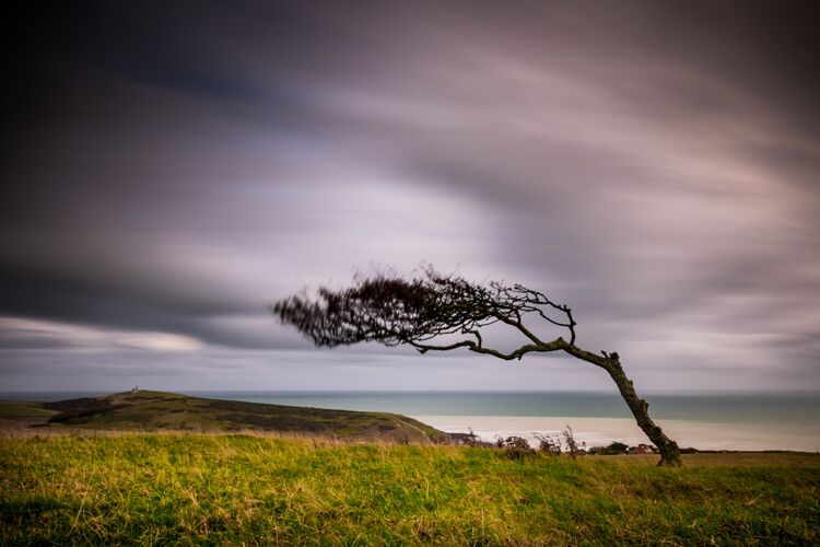 Windswept tree on Went Hill