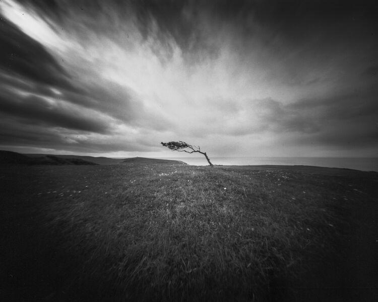 Windswept tree on Went hill, Birling gap