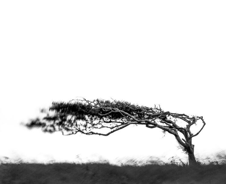 Windswept on Beachy head
