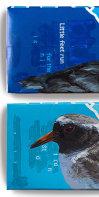 New Zealand shore plover