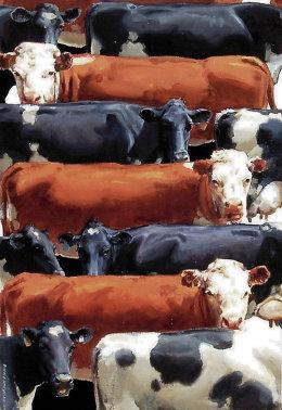 cow koru