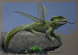 New Zealand Dragon