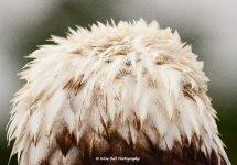 Bald Eagle Feathers 2