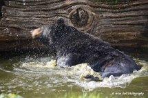Black Bear Shake