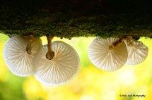 Fungi 5