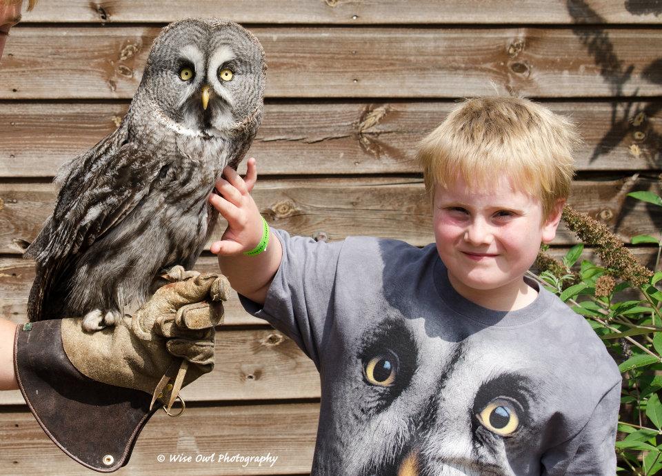 Great Grey Owl 5 with Junior Handler Harry