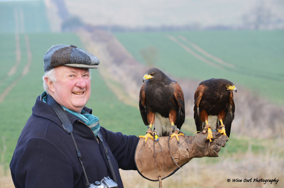 Harris Hawk Pair